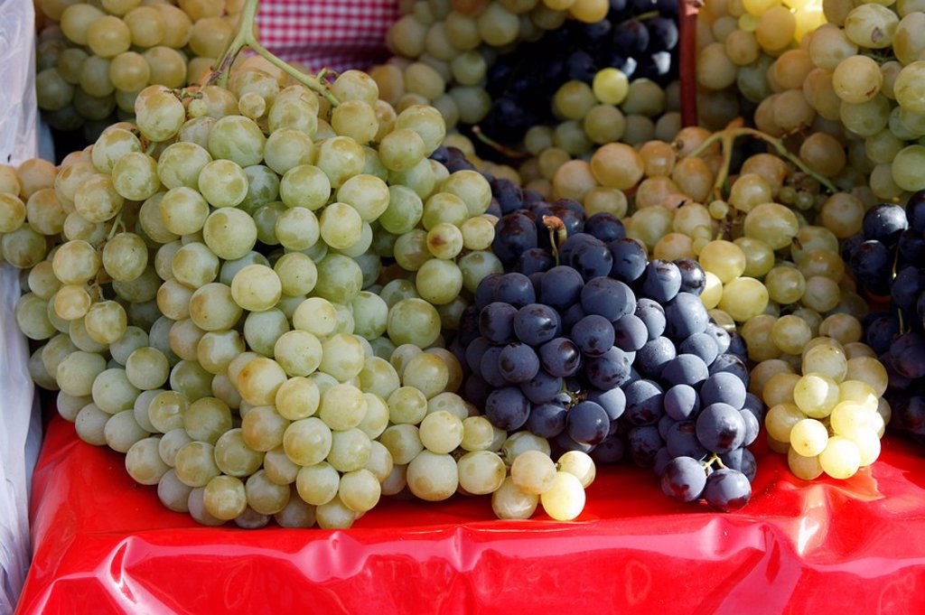 Stock Photo: 4133-24480 Grape-vine,Grape vine,Vitis vinifera,Germany