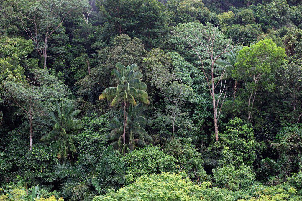 Stock Photo: 4133-28432 Borneo Landscape,Sabah,Malaysia,Borneo,Asia. Borneo Landscape,Sabah,Malaysia,Borneo,Asia,rainforest