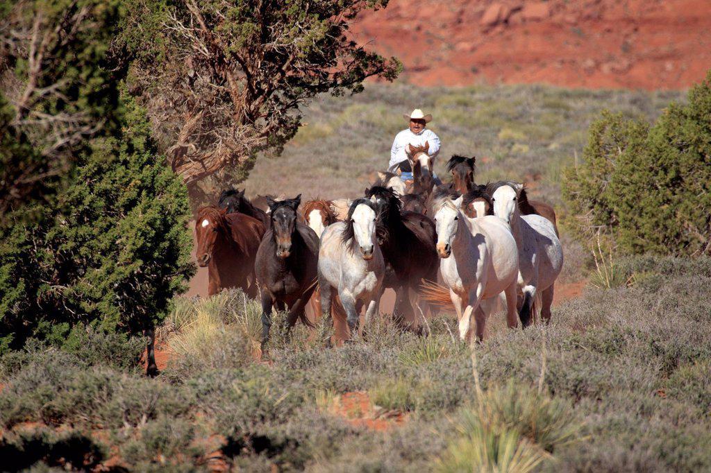 Stock Photo: 4133-31256 Navajo Cowboy, Mustang, Equus caballus, Monument Valley, Utah, USA, Northamerica. Navajo Cowboy, Mustang, Equus caballus, Monument Valley, Utah, USA, Northamerica, Cowboy and Mustang