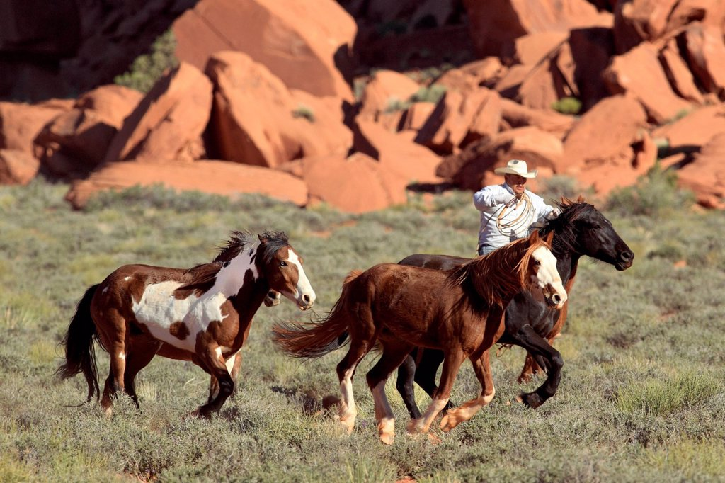 Stock Photo: 4133-31263 Navajo Cowboy, Mustang, Equus caballus, Monument Valley, Utah, USA, Northamerica. Navajo Cowboy, Mustang, Equus caballus, Monument Valley, Utah, USA, Northamerica, Cowboy and Mustang