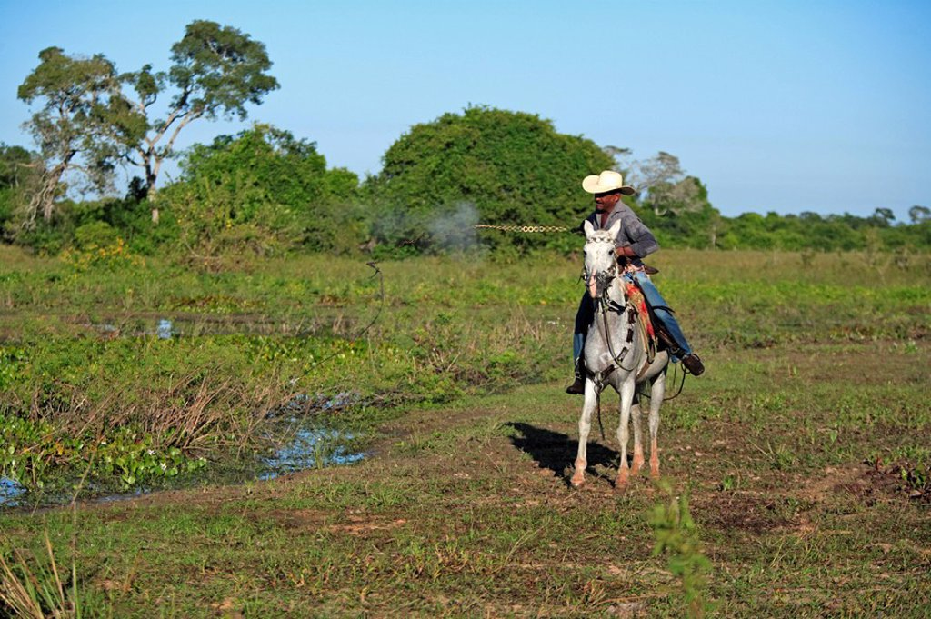 Stock Photo: 4133-3339 Pantanal Cowboy,Pantaneiro,Horse,Pantaneiro Horse,Pantanal,Brazil