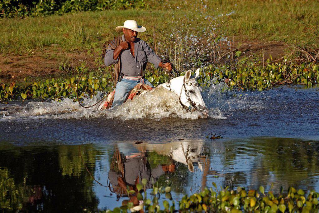 Pantanal Cowboy,Pantaneiro,Horse,Pantaneiro Horse,Pantanal,Brazil : Stock Photo
