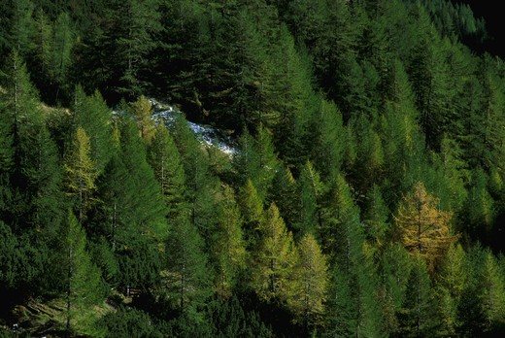 hohe tauern national park grossglockner, austria. woodland near the sattelalm alp hut.  : Stock Photo