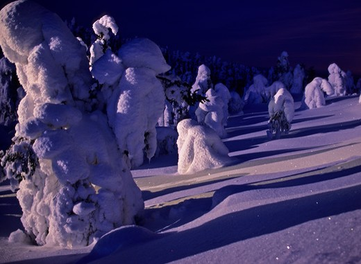snow-covered taiga forest at moonrise lapland, finland.  : Stock Photo