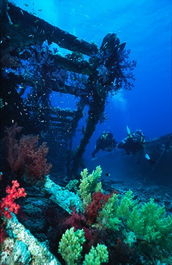 bluff point barge wreck overgrown with corals strait of gubal, gulf of suez, red sea, egypt.  : Stock Photo