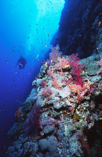 Stock Photo: 4141-17373 coral reef scene st john's reef, red sea, southern egypt.