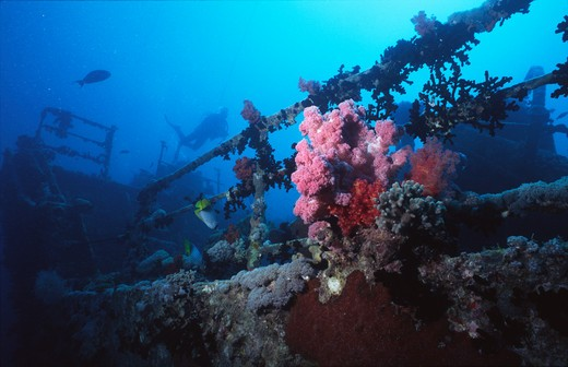 thistlegorm wreck strait of gubal, gulf of suez, red sea, egypt. : Stock Photo