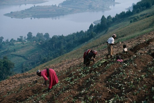hillside subsistence farming three women working while two children watch south west uganda  : Stock Photo