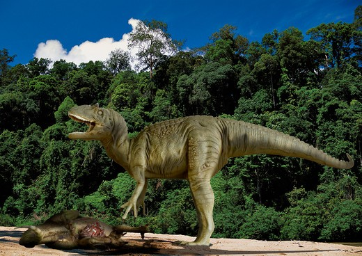allosaurus fragilis digital composite of a male allosaurus fragilis, a large theropod carnosaur from the late jurassic period, towering above its disemboweled prey in what is today the state of colorado in the usa. : Stock Photo