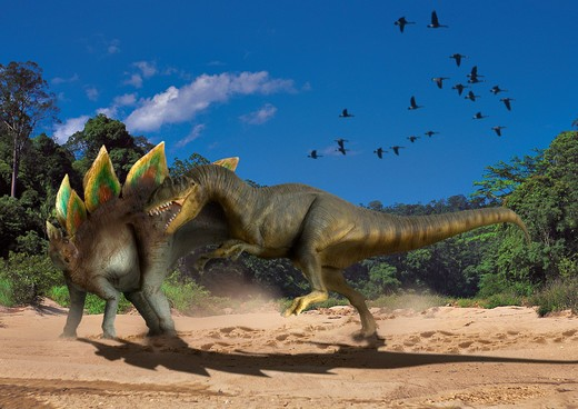 Stock Photo: 4141-23683 allosaurus & stegosaurus digital composite of a male allosaurus fragilis, a large theropod carnosaur from the late jurassic period, attacking a male stegosaurus stenops, a plant-eating ornitischian dinosaur, in what is today the state of colorado in th