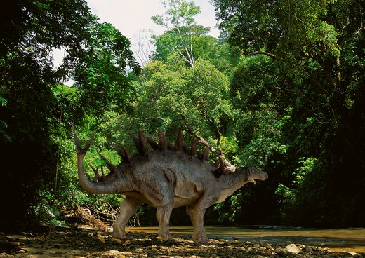 Stock Photo: 4141-23688 kentrosaurus digital composite of a kentrosaurus - a stegosaurian herbivorous dinosaur from the late jurassic period - ambling by a forest stream in what is today tanzania.
