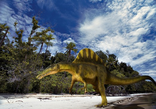 Stock Photo: 4141-23689 spinosaurus aegypticus digital composite of an adult spinosaurus aegypticus, a large carnivorous (probably fish-eating) theropod from the late cretaceous period, striding on a beach in what is today morocco in africa.