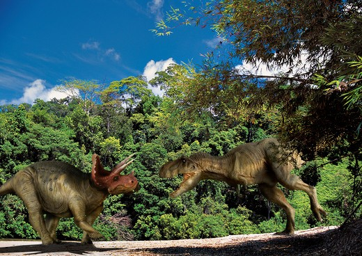 tyrannosaurus & triceratops digital composite of an adult tyrannosaurus rex, a 12.5 meter-long carnivorous theropod dinosaur from the late cretaceous period, attacking an adult male triceratops horridus, a large three-horned ceratopsian dinosaur from t : Stock Photo