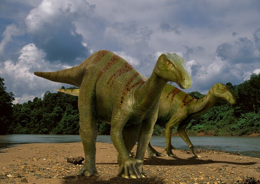 iguanodon anglicum pair a plant-eating ornitischian dinosaur with spiked thumbs from the early cretaceous period, walking by a riverbank in what is today england. : Stock Photo