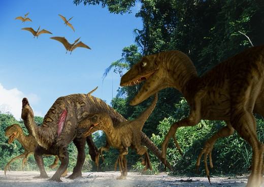 Stock Photo: 4141-23704 utahraptor ostrommaysi pack a carnivorous dromaeosaurid dinosaur from the mid-cretaceous period, attacking a young tenontosaurus in what is today utah in the usa.