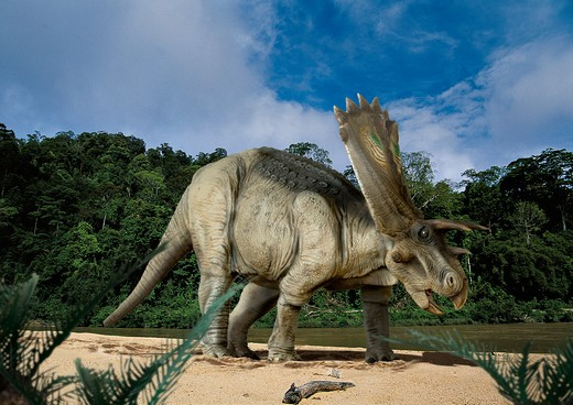 Stock Photo: 4141-23719 digital composite of a male anchiceratops ornatus, a large three-horned ceratopsid dinosaur from the late cretaceous, ambling by a muddy river in what is today the state of alberta in canada.