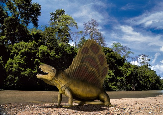 Stock Photo: 4141-23724 digital composite of dimetrodon angelensis, a sail-fin mammal-like pelycosaur from the permian period from what is today north america.