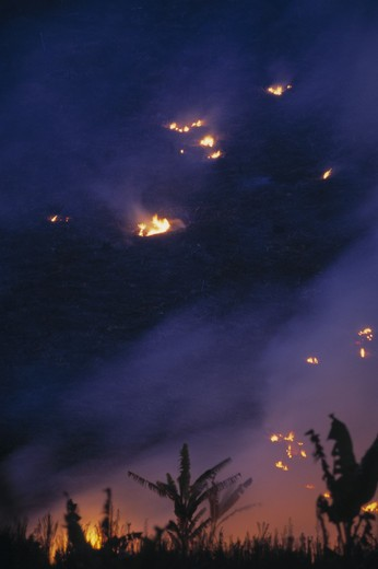 Stock Photo: 4141-23902 slash & burn of rainforest clearing for agriculture madagascar.