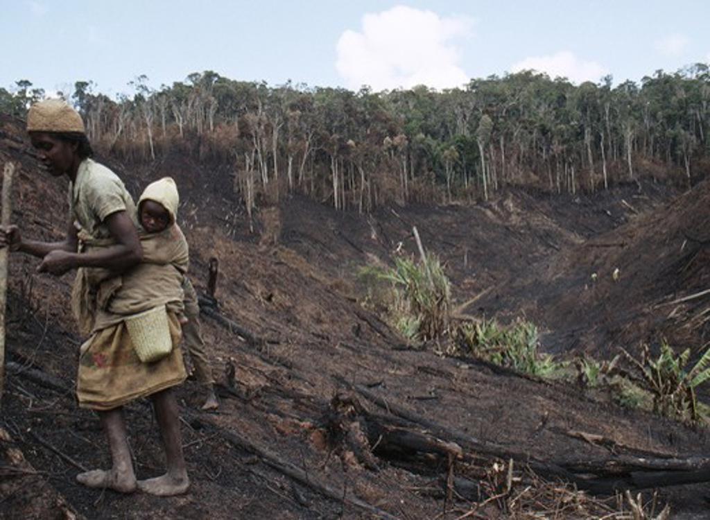 Stock Photo: 4141-23907 villager planting manioc after slash & burn (tavy culture) of rainforest near mantadia national park madagascar