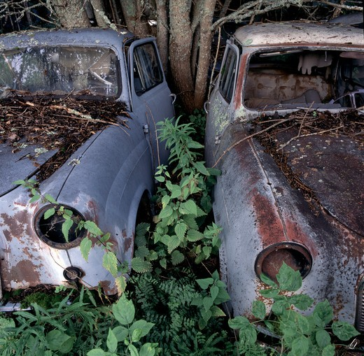 Stock Photo: 4141-28357 decaying cars gradually being reclaimed by nature.