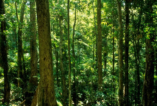 Stock Photo: 4141-36612 tropical rainforest eungella national park, queensland, north eastern australia