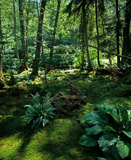 Stock Photo: 4141-37418 the moss garden at bloedel reserve, washington state, usa