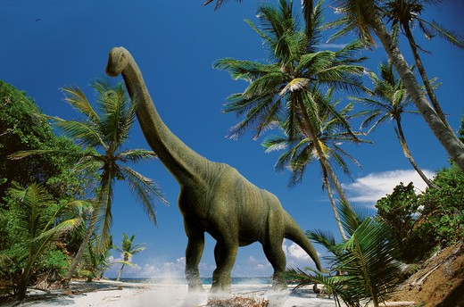 Stock Photo: 4141-37524 digital composite of an adult brachiosaurus altithorax, a gigantic sauropod herbivorous dinosaur from the middle to late jurassic period, striding on a beach in what is today north america. date: 18.11.2008 ref: zb377_124722_0032 compulsory credit: nhpa/photoshot