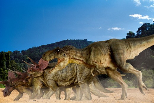 digital composite of an adult tyrannosaurus rex, a 12.5 meter-long carnivorous theropod dinosaur from the late cretaceous period, attacking a herd of triceratops horridus, a large three-horned ceratopsian dinosaur from the same time frame, in what is today western north america. date: 18.11.2008 ref: zb377_124722_0039 compulsory credit: nhpa/photoshot : Stock Photo