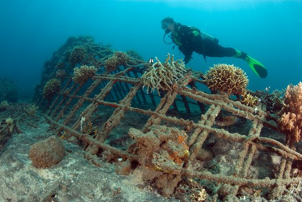 Stock Photo: 4141-39225 scuba diver visiting the structure of bio-rock, method of enhancing the growth of corals and aquatic organisms, in taman sari bali cottages, karang lestari pemuteran project, desa pemuteran, singaraja, bali island, indonesia, pacific ocean date: 22.07.08 ref: zb777_117071_0024 compulsory credit: oceans-image/photoshot