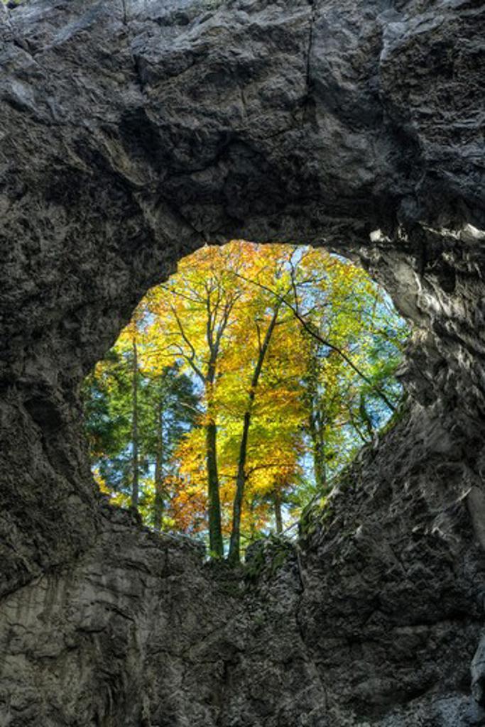 Stock Photo: 4141-41048 collapsed cave roof revealing autumn foliage, zelska jame cave system, rakov skocjan karst gorge, notranjska, slovenia date: 06.11.2008 ref: zb812_123820_0025 compulsory credit: nhpa/photoshot