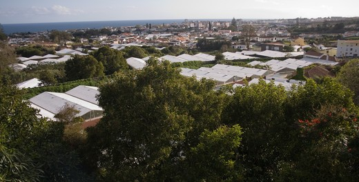 greenhouses with white painted roofs for growing pineapples, , san miguel, azores date: 15.10.2008 ref: zb869_126375_0020 compulsory credit: woodfall wild images/photoshot  : Stock Photo