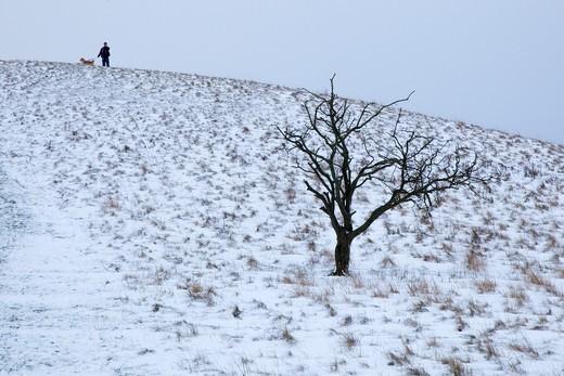 Stock Photo: 4141-45064 pitstone hill on ridgeway path buckinghamshire in snow