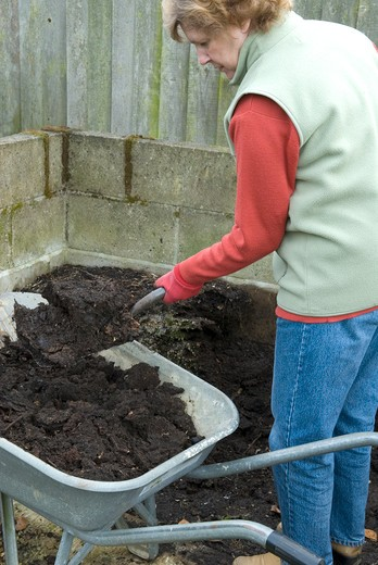 woman gathering rotted organic compost from bay and loading into wheelbarrow for garden use date: 17.11.2008 ref: zb899_124606_0005 compulsory credit: photos horticultural/photoshot  : Stock Photo