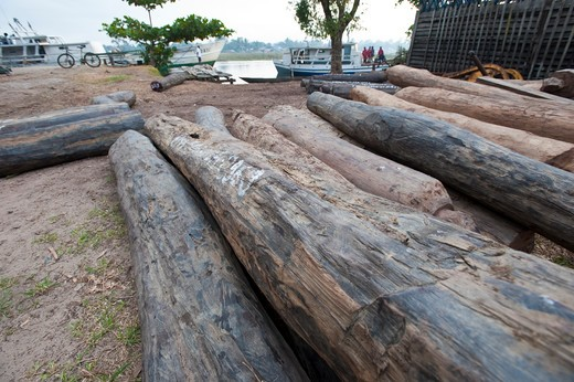 Stock Photo: 4141-50870 Hardwoods (Rosewood Sp.) Lying On The Quayside In Maroantsetra. Collected Illegally From The Region Of Masoala National Park, North East Madagascar. November 2009.
