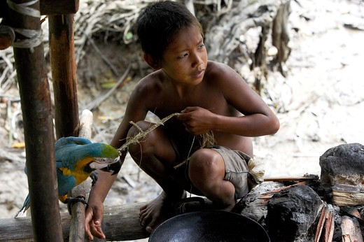 Warao Child Playing With A Blue And Yellow Parrot Ara Ararauna, Indian Living In Orinoco Delta, Venezuela : Stock Photo