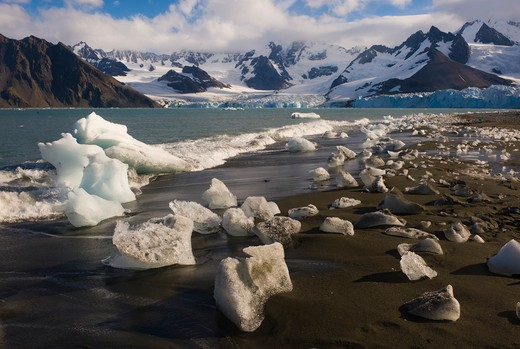 Stock Photo: 4141-5248 ice on shore and the weddell glacier; gold harbor, south georgia island.