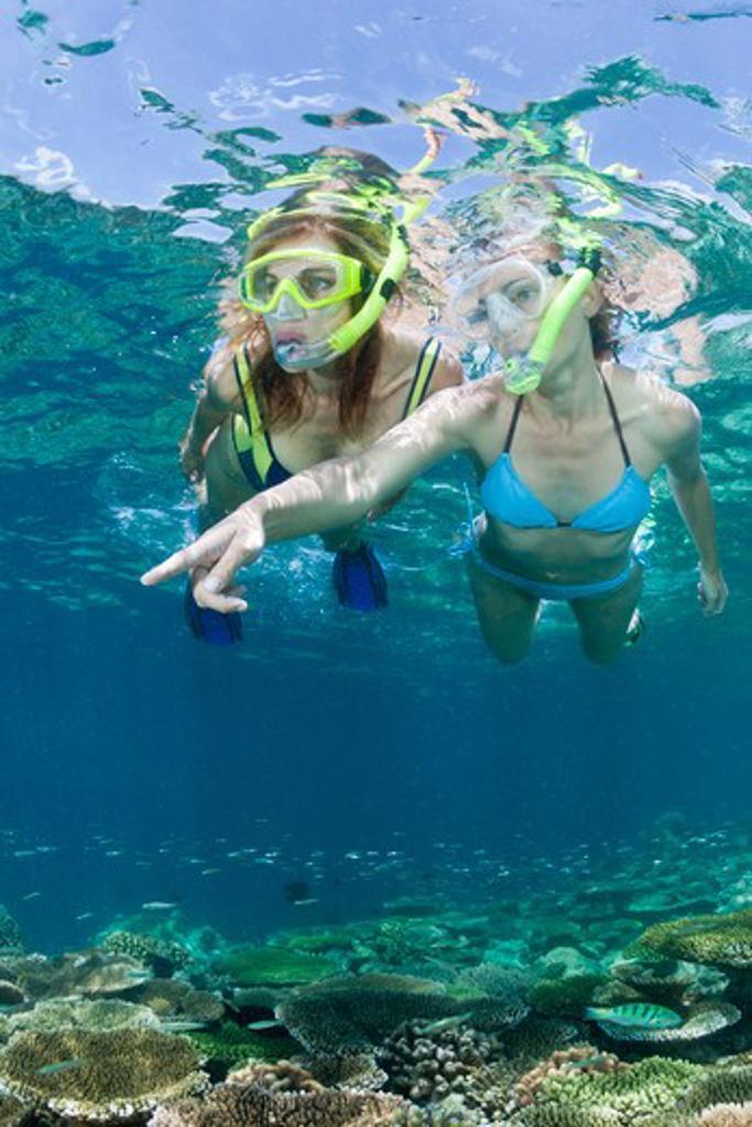 Skin Diving At Maldives, Ellaidhoo House Reef, North Ari Atoll, Maldives : Stock Photo