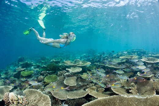 Stock Photo: 4141-53732 Healty Reef And Skin Diver, Ellaidhoo House Reef, North Ari Atoll, Maldives
