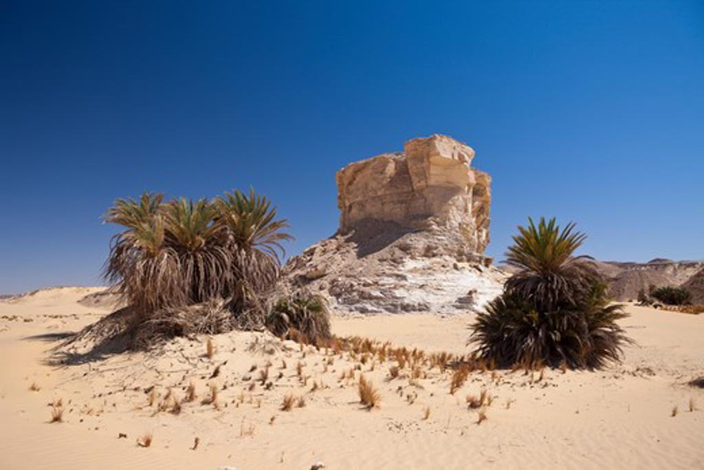 Oasis Al-Wadi Near White Desert National Park, Libyan Desert, Egypt : Stock Photo