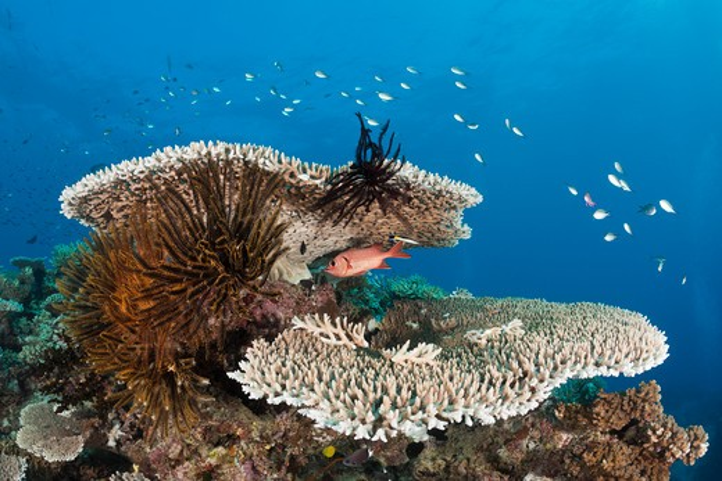 Stock Photo: 4141-54184 Coral Reef, Wakaya, Lomaiviti, Fiji