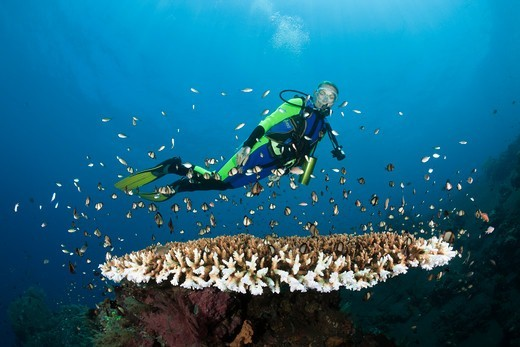 Scuba Diving At Bali, Alam Batu, Bali, Indonesia : Stock Photo