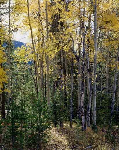 Fall In Rocky Mountains, Colorado, Usa : Stock Photo