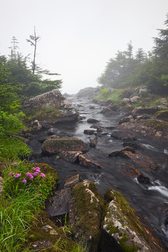 Stream Flowing Between The Upper And Lower Melakwa Lakes, In Fog, Mt. Baker-Snoqualmie National Forest, Washington State, Usa,  July : Stock Photo
