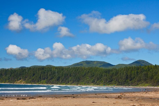 Stock Photo: 4141-54735 Looking North Along Shi Shi Beach From Willoughby Creek, With The Makah Reservation Distant, Olympic National Park, Washington State, Usa, June, Point_Of_Arches-250