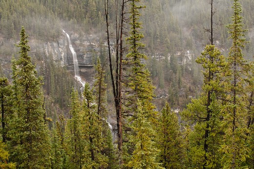 Stock Photo: 4141-56762 Bridal Veil Falls In Jasper National Park