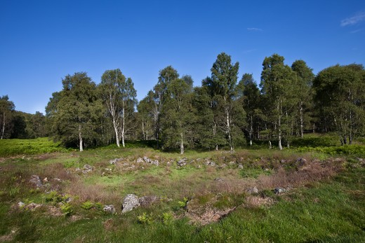 Stock Photo: 4141-56883 Neolithic Hut Circles At Muir Of Dinnet