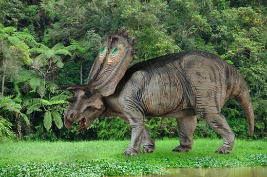 Digital Composite Of A Male Anchiceratops Ornatus, A Large Three-Horned Ceratopsid Dinosaur From The Late Cretaceous, Ambling By A Muddy River In What Is Today The State Of Alberta In Canada. : Stock Photo