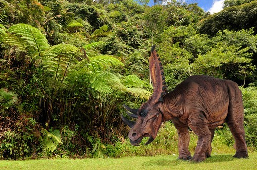 Digital Composite Of An Adult Male Chasmosaurus Belli, A Large Plant-Eating Ceratopsian Dinosaur From The Late Cretaceous Period, In What Is Today  The State Of Alberta In Canada. : Stock Photo
