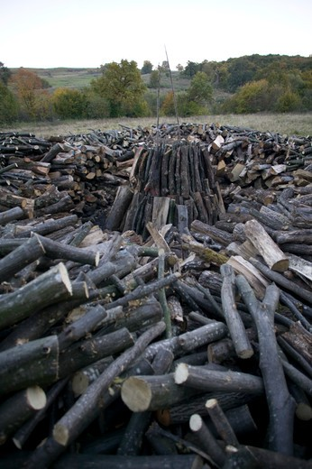 Stock Photo: 4141-60483 Base Of Charcoal Mound (Coppiced Wood) - Hornbeam. Eec Scheme Of Sustainable Management Of Landscape, Saxon Part Of Transylvania, Romania