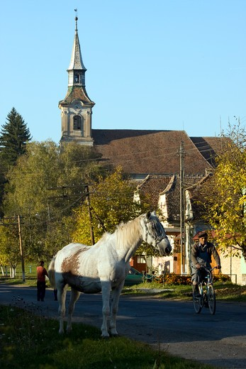 Stock Photo: 4141-60514 White Horse In Main Street In Saxon Village, Peasant Community Where Horses Are Still Widely Used For Drawing Carts And Trade, Saxon Part Of Transylvania, Romania